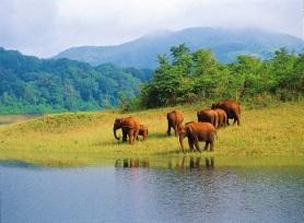 5.elephants