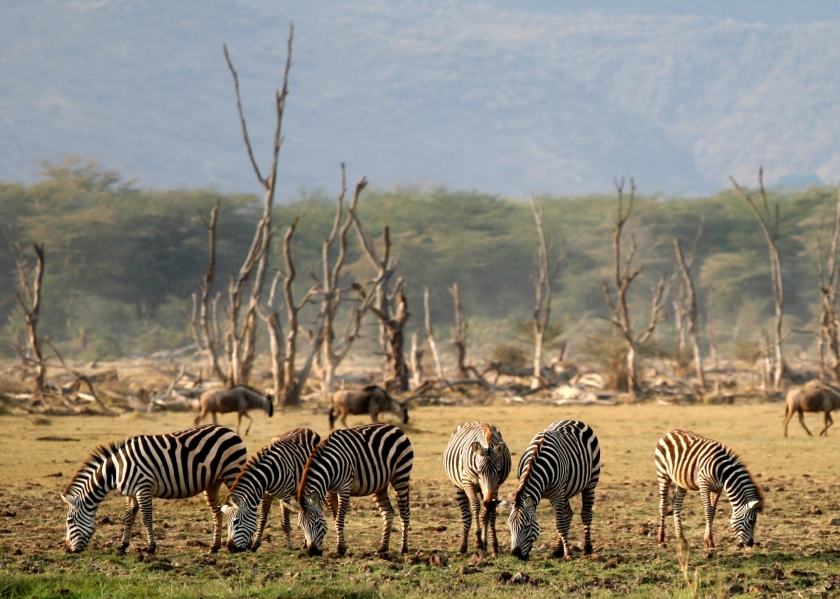 lake_manyara_wildlife