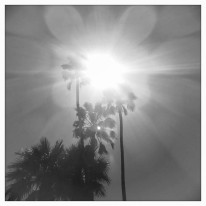 palm tree sunlight