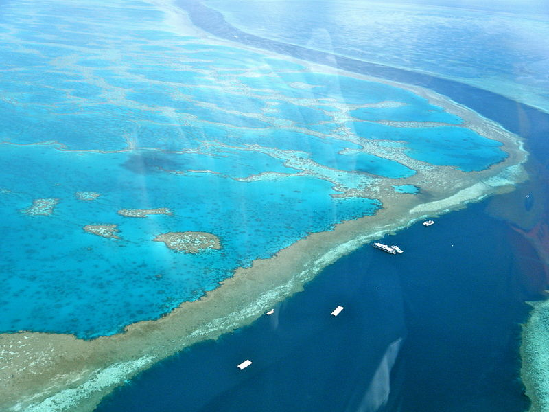 Amazing Great Barrier Reef.jpg